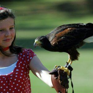 Falconry & birds of prey