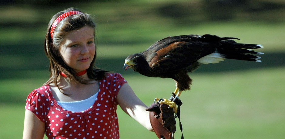 Falconry & birds of prey